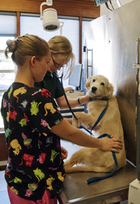 Animal Care Services - The Animal Clinic - Vet Hospital