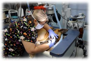 Pet Dentistry - The Animal Clinic - Galveston, TX