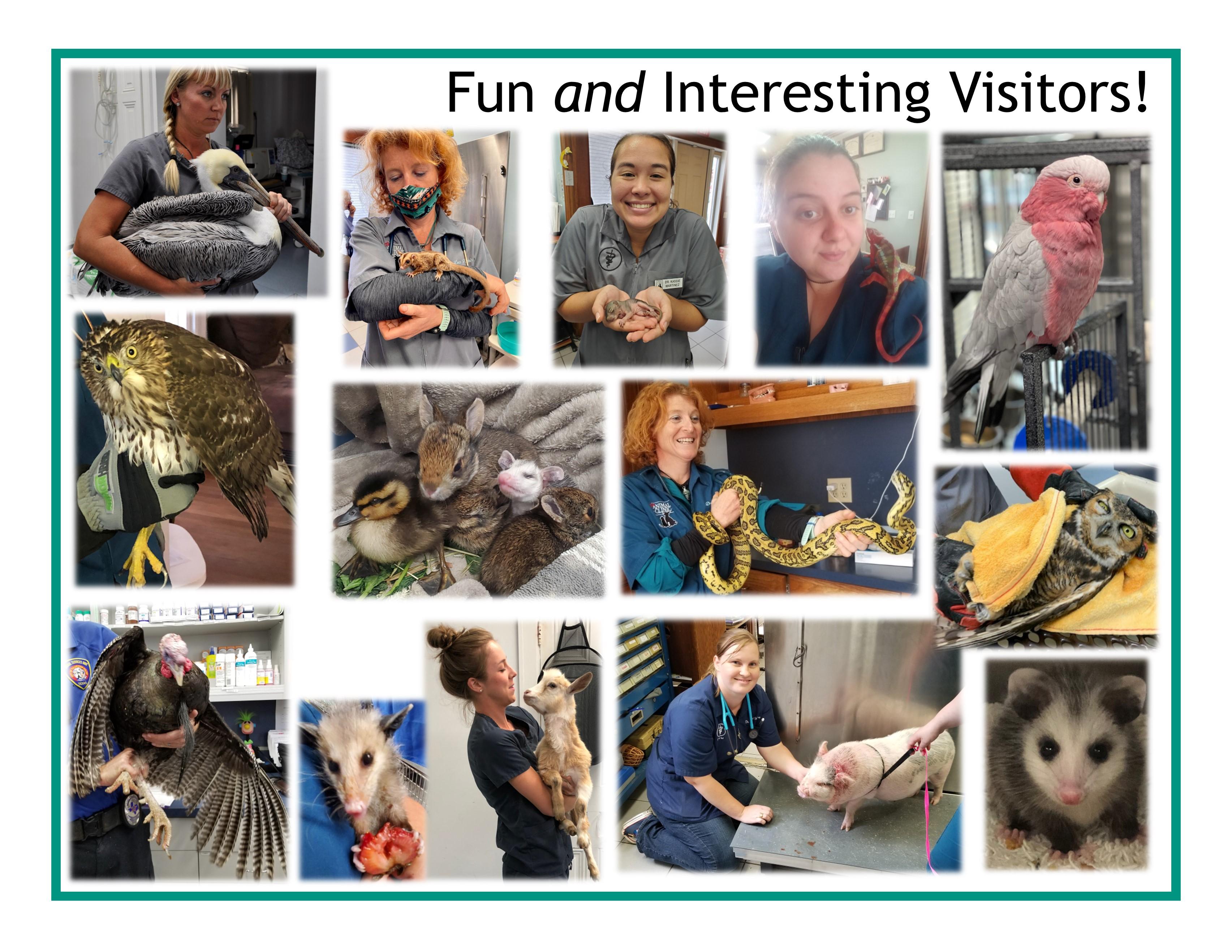 Exotic Pet Clinic - The Animal Clinic - Galveston, TX